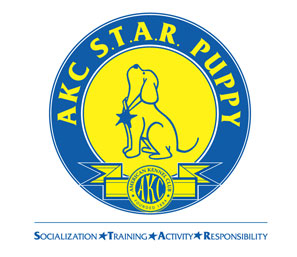 AKC Star Puppy